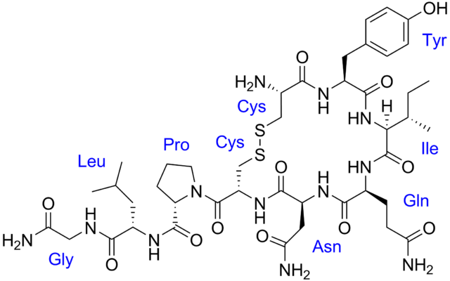 Image of the oxytocin molecule